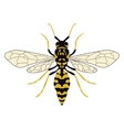Wasp top view vector image