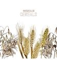Watercolor cereals design vector image