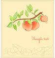 apple tree postcard vector image