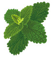 art with nettle vector image