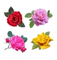 Flowers with leaves vector image vector image