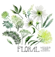 Watercolor green floral collection vector image