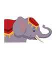 circus elephant with clothes decoration show vector image