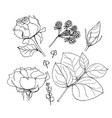 set of elements of roses and vector image