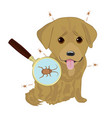 dog ticks in fur vector image