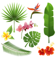 tropical plants vector image