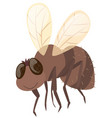 house fly on white background vector image