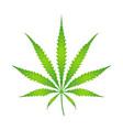 Color cannabis marijuana vector image