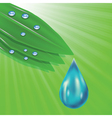 green leaves and water drops vector image