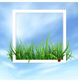 white window vector image