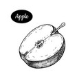 hand drawn sketch style fresh apple vector image