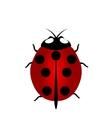 ladybird icon Red Ladybug vector image