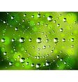 Abstract spider web with dew drops vector image