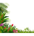 plant tropical on isolated background vector image