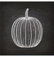 chalk sketch of pumpkin vector image