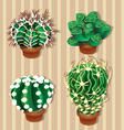 Realistic cactus vector image