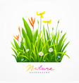 beautiful variety of flowers with green leaves vector image