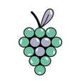 Delicious grape fruit with vitamins and protein vector image