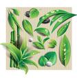 Set of leaf vector image