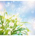 Spring Snowdrop Flowers vector image