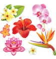 Set of tropical flowers vector image