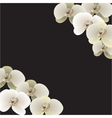 Nine orchid flowers vector image