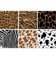 animal skin prints vector image