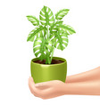 Holding A Houseplant vector image