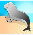 walrus vector image vector image