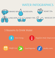 Water in Human Body Infographics vector image