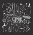 Set of vegetables in doodle style on the vector image