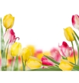 Tulips design template or background EPS 10 vector image