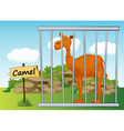 Cartoon Zoo Camel vector image vector image