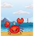 beachside crab vector image