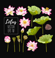 set of lotus flowers and leaves vector image