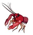 Red lobster cancer vector image