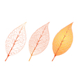 Autumn Orange Leaf Set vector image
