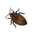 bug design icon vector image
