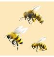 Watercolor hand drawn bees vector image