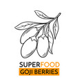 Icon superfood goji berry vector image