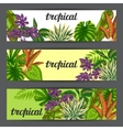 Banners with tropical plants and leaves Image for vector image