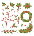 christmas holly berry decoration leaves vector image