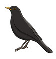 hand drawn blackbird sketch vector image