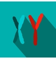 X and Y chromosome flat icon vector image