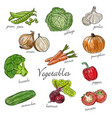 types of fresh vegetables with description vector image