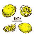 Digital detailed color lemon hand drawn vector image