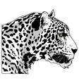 White Cougar Head Art vector image
