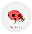 Coccinella vector image
