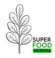 icon superfood moringa vector image
