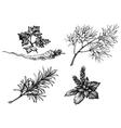 Vegetables and herbs drawings on white hand drawn vector image
